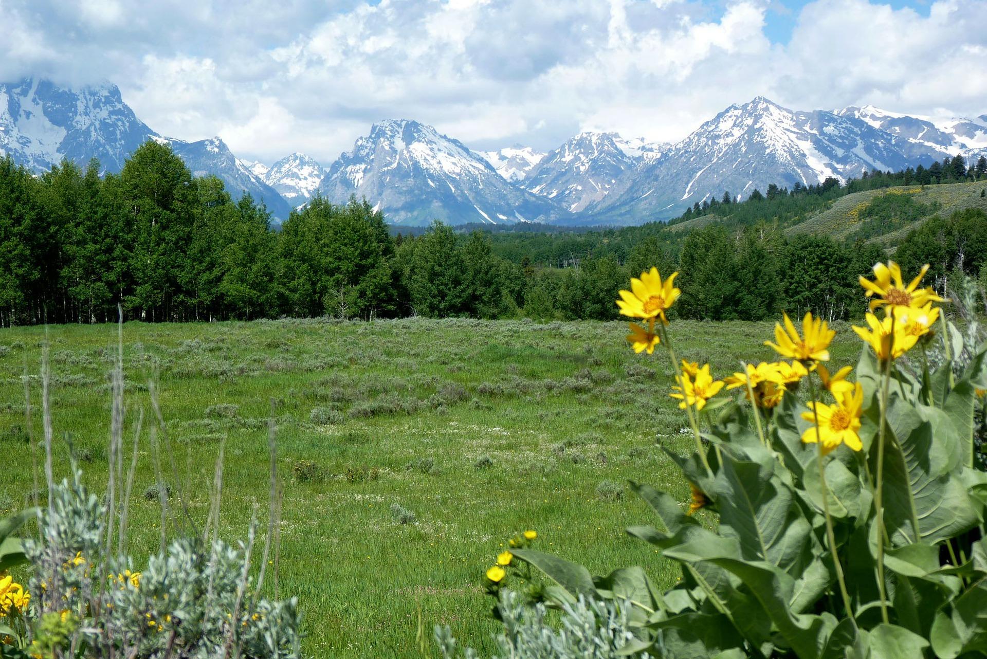 Fiori Selvatici Foto E Nomi erbe selvatiche commestibili di montagna - sentieri montagna