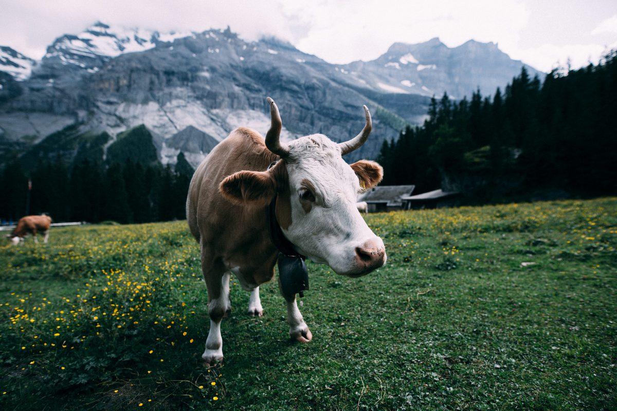 Animali di Montagna