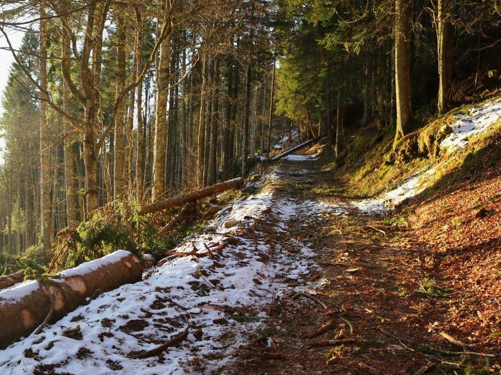 forte-campolongo-sentiero-cai-810