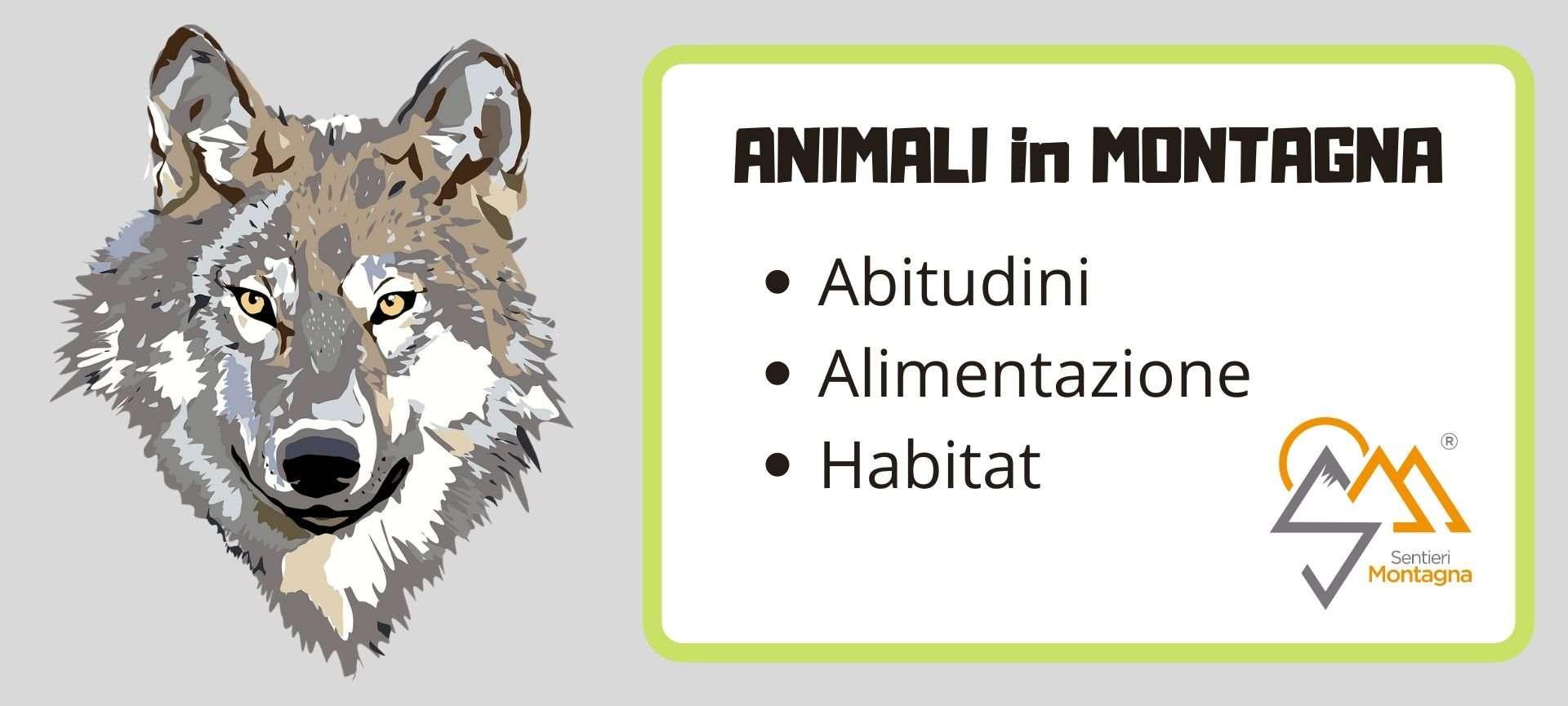 riconoscimento impronte animali